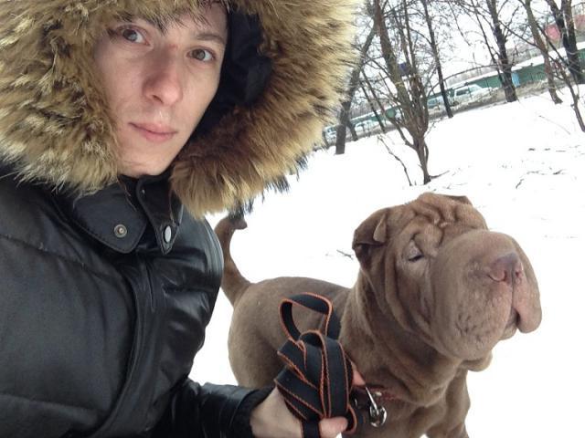 Собака. Шар пей. Продаю в Москве