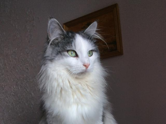 Кошка.  Беспородные и метисы . Отдам в дар в Минске
