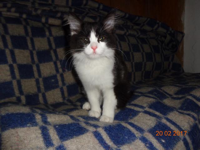Кошка.  Беспородные и метисы . Потеря/Находка в Барнауле