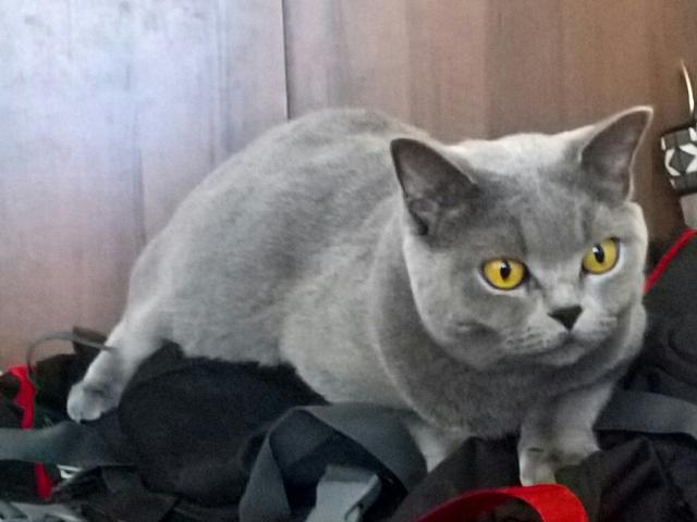 Вязка кошек частные объявления продам емкости дать объявление