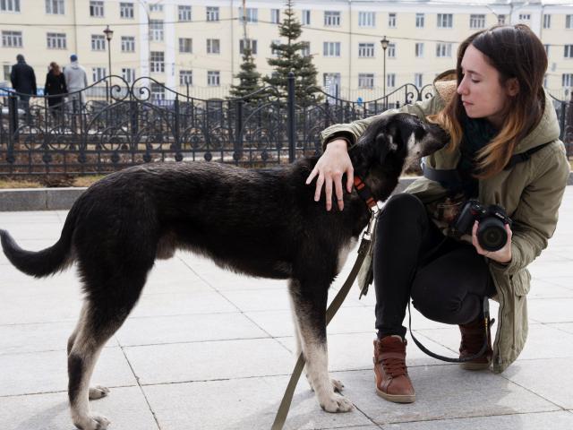 Собака.  Бeспородные и метисы . Отдам в дар в Екатеринбурге