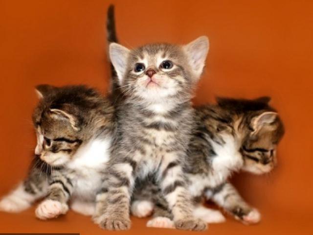 Кошка.  Беспородные и метисы . Отдам в дар в Люберцах