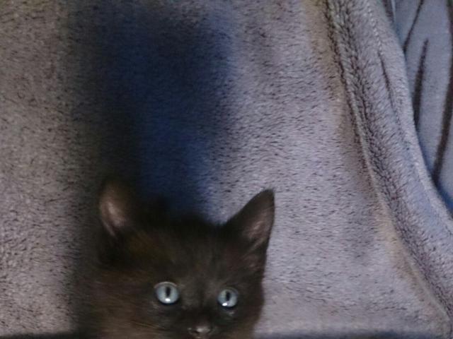 Кошка.  Беспородные и метисы . Отдам в дар в Уфе