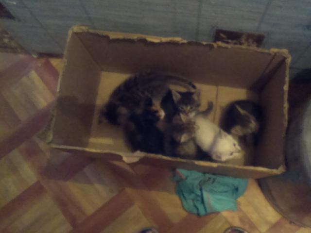 Кошка.  Беспородные и метисы . Отдам в дар в Иркутске