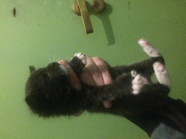 Кошка.  Беспородные и метисы . Отдам в дар в Владивостоке