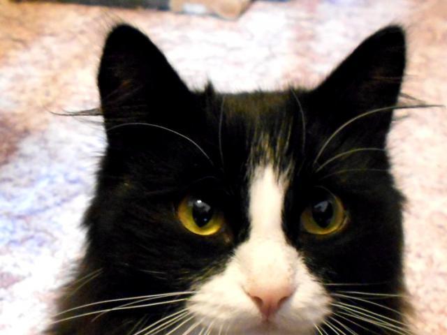 Коты в томске в дар
