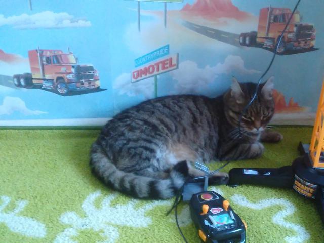 Кошка.  Беспородные и метисы . Потеря/Находка в Екатеринбурге