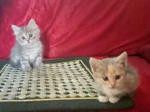 Частные объявления котята москва подарю продажа бизнеса оао калужский мясокомбинат