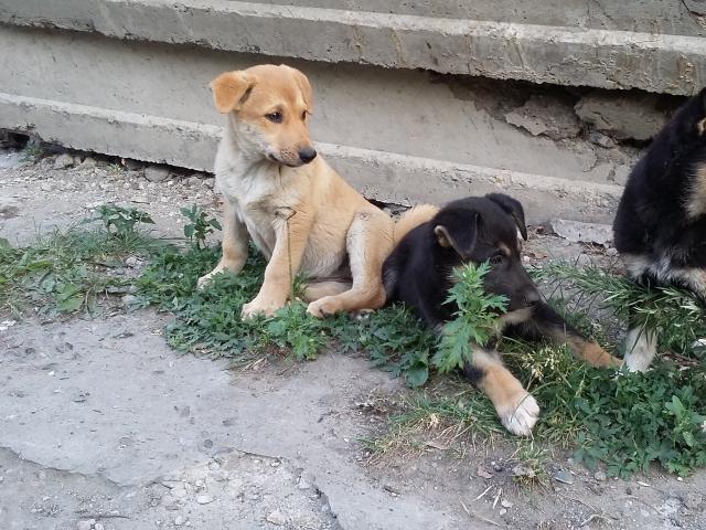 Собака.  Бeспородные и метисы . Отдам в дар в Красноярске