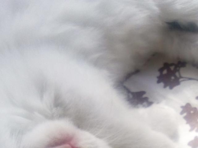 Кошка.  Беспородные и метисы . Отдам в дар в Брянске