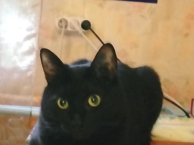 Кошка.  Беспородные и метисы . Потеря/Находка в Москве
