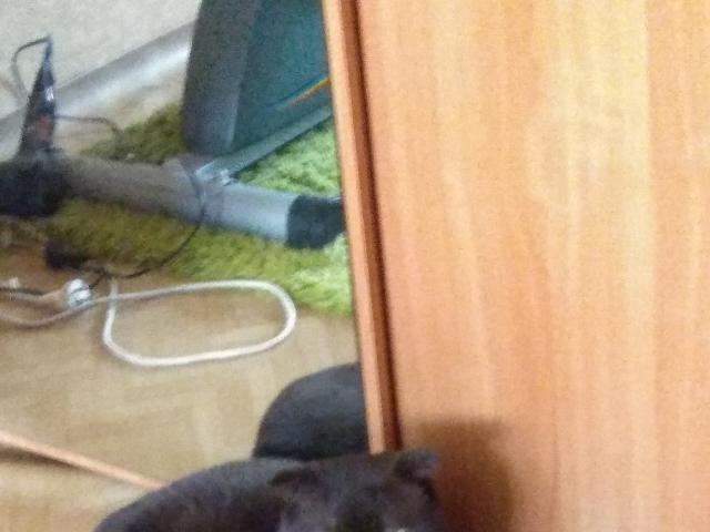 Кошка. Шотландская вислоухая (короткошерстная). Вязка в Красноярске