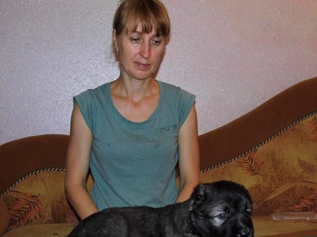 Собака. Кавказская овчарка. Продаю в Кропоткине