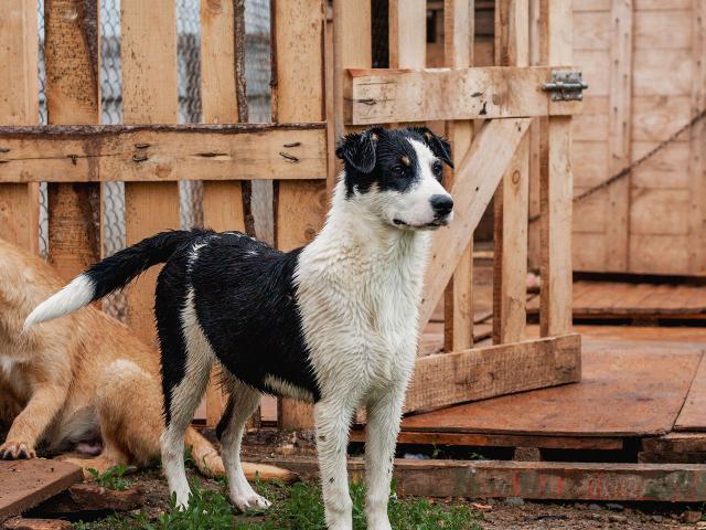 Собака.  Бeспородные и метисы . Потеря/Находка в Перми