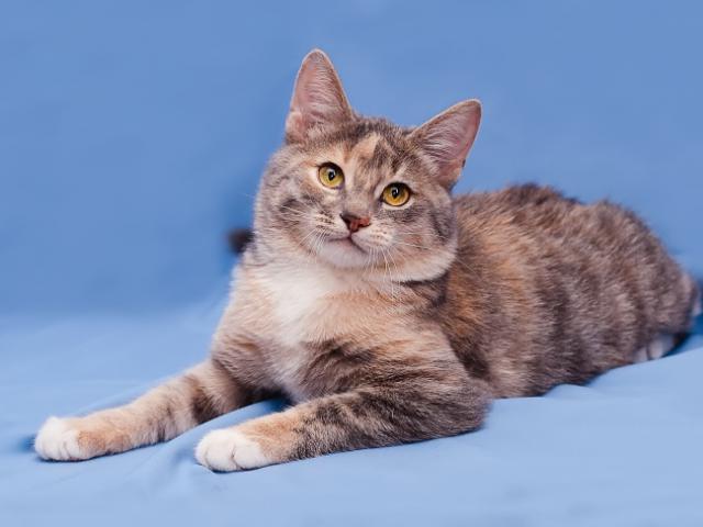 Котенок Триша в дар