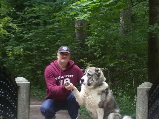 Собака. Кавказская овчарка. Вязка в Санкт-Петербурге