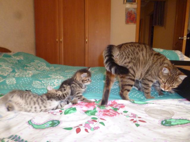 Кошка.  Беспородные и метисы . Потеря/Находка в Омске