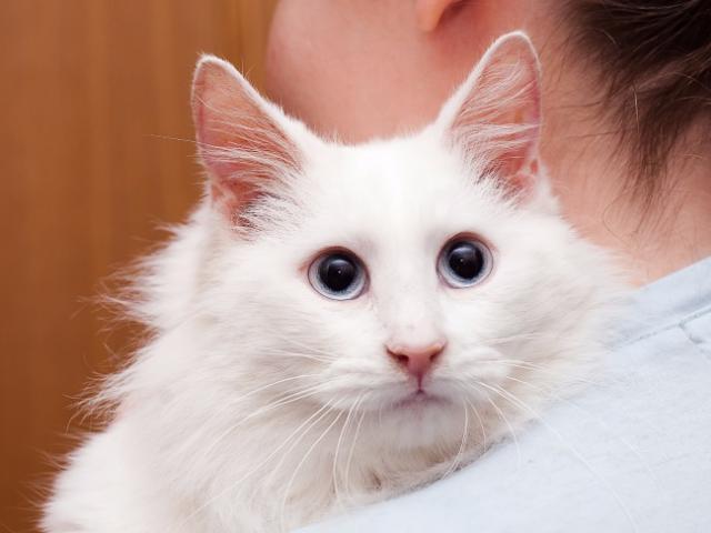 Кошка.  Беспородные и метисы . Отдам в дар в Москве