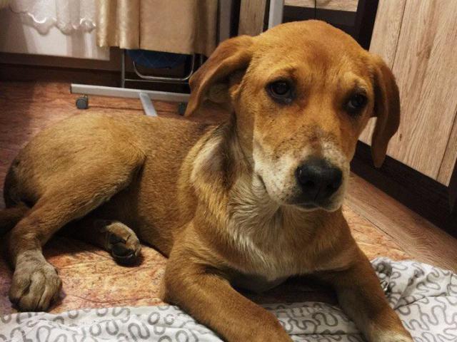 Отдам в дар собаку объявление н.новгород дать объявление бесплатно продажа малосемейки во владимире