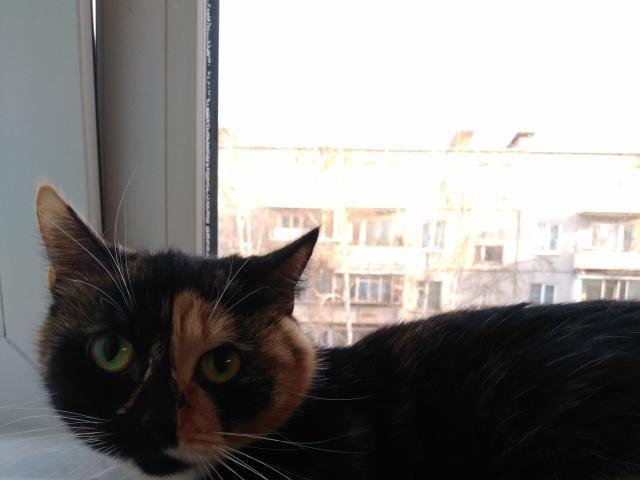 Кошка. Сибирская. Отдам в дар в Томске