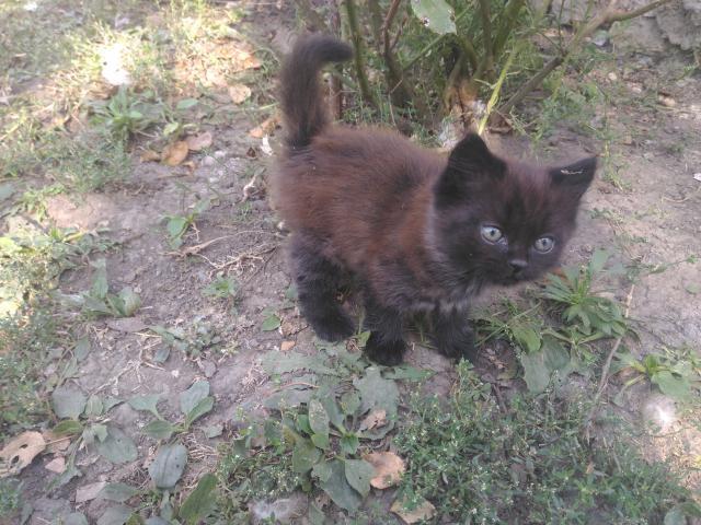 Кошка. Турецкая ангора. Отдам в дар в Ставрополе