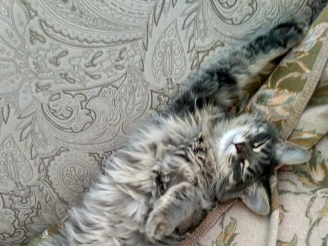 Кошка.  Беспородные и метисы . Потеря/Находка в Самаре