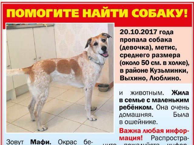 Собака.  Бeспородные и метисы . Потеря/Находка в Москве