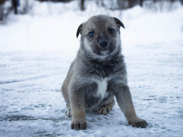 Собака.  Бeспородные и метисы . Отдам в дар в Новосибирске