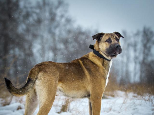 Товары для собак гатчина