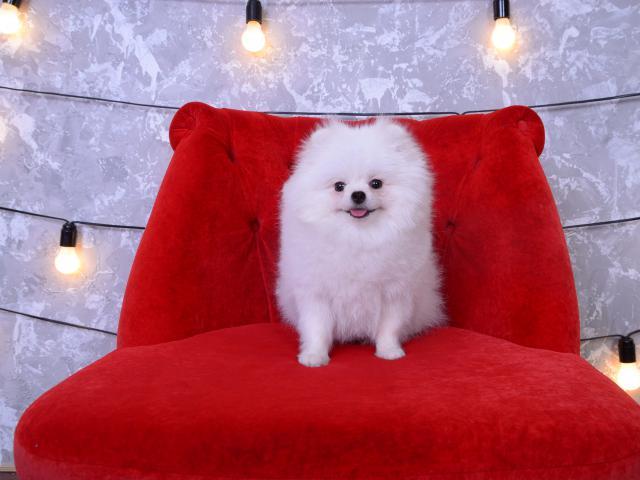 Собака.  Бeспородные и метисы . Вязка в Санкт-Петербурге