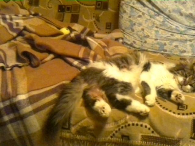 Кошка.  Беспородные и метисы . Продаю в Москве