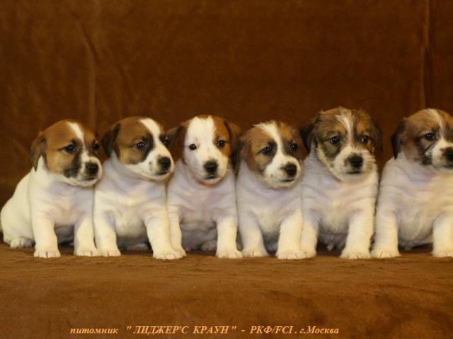 Дать объявление собаки москва дать объявление о работе в чугуеве