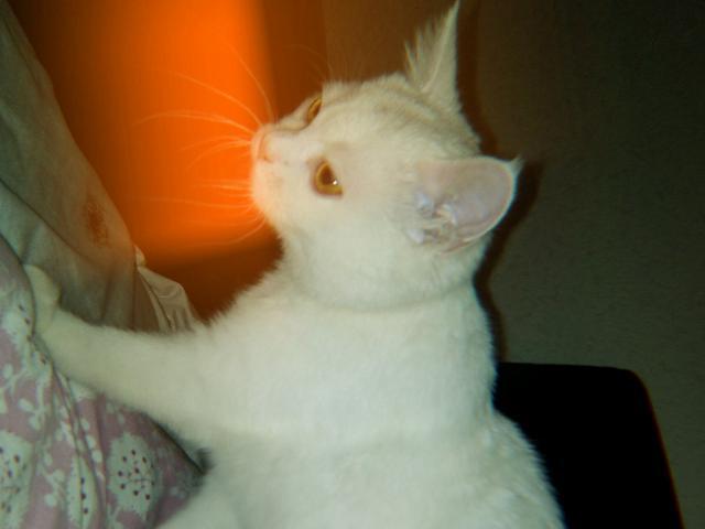 Кошка.  Беспородные и метисы . Возьму в дар в Краснодаре