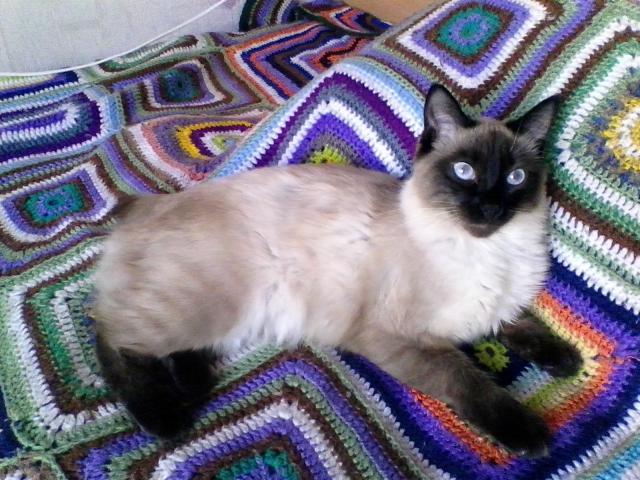 Кошка. Меконгский бобтейл. Вязка в Екатеринбурге