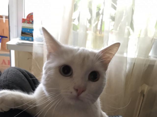 Кошка.  Беспородные и метисы . Потеря/Находка в Перми