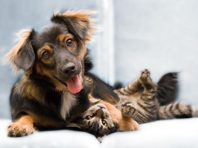 Услуги. Ветеринарные услуги. Услуги в Москве