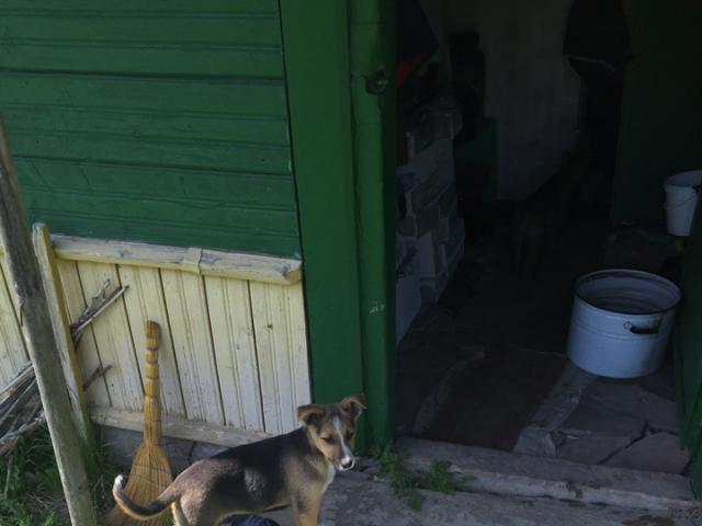 Собака.  Бeспородные и метисы . Отдам в дар в Минске