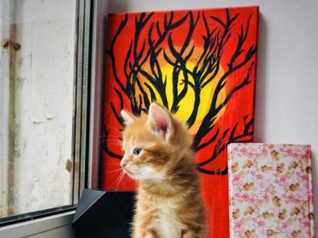 Кошка.  Беспородные и метисы . Продаю в Мытищах
