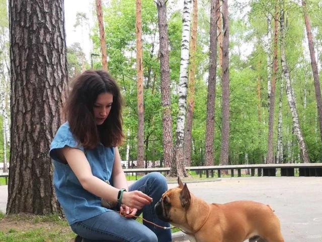 Собака. Французский бульдог . Вязка в Москве