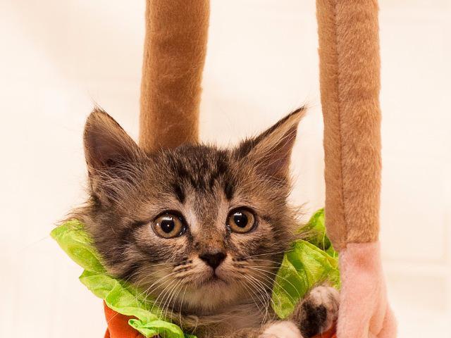 Котенок Манюня в добрые руки