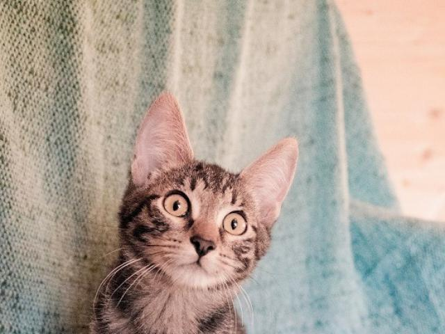 Котик-шпротик Афонька очень хочет домой!