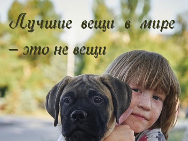 Собака. Бульмастиф. Продаю в Москве
