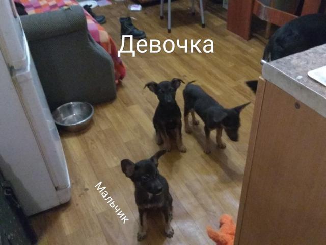 Собака.  Бeспородные и метисы . Отдам в дар в Щелково
