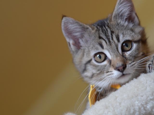 Кошка. Европейская короткошерстная. Отдам в дар в Набережных Челнах