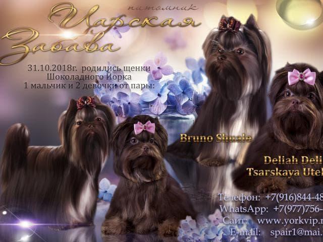 Собака. Йоркширский терьер . Продаю в Москве
