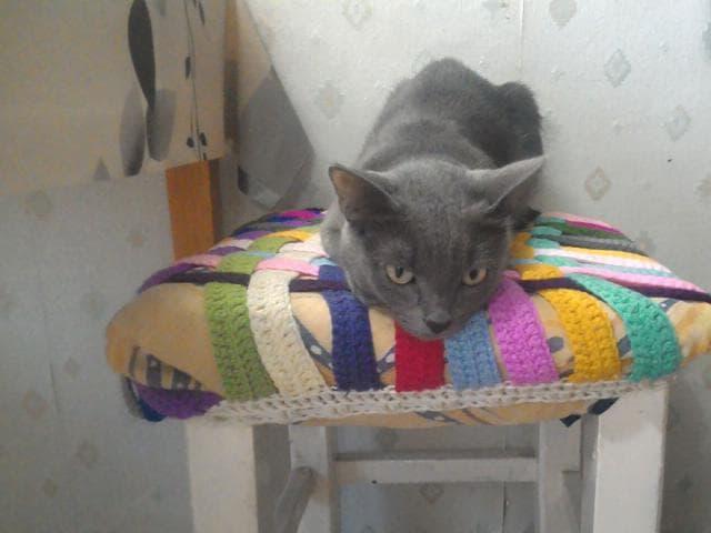 Кошка. Русская голубая. Вязка в Москве