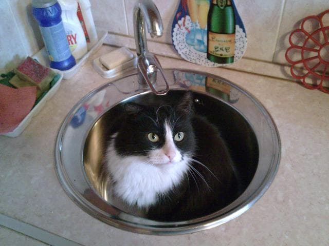 Кошка.  Беспородные и метисы . Возьму в дар в Пушкино