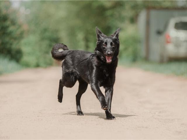 Чудесный щенок Кортни в добрые руки!