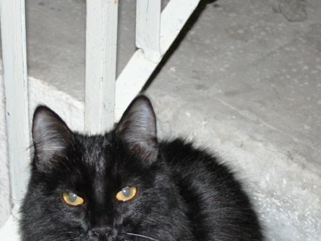 Кошка.  Беспородные и метисы . Потеря/Находка в Красноярске