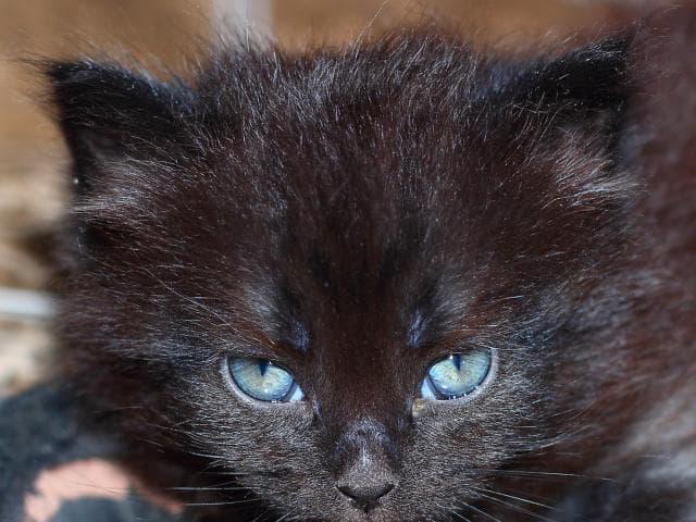 Кошка.  Беспородные и метисы . Отдам в дар в Краснодаре